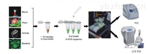 鲍疱疹样病毒PCR检测试剂盒供应商