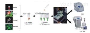 鮑球狀病毒PCR檢測試劑盒廠家