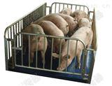 專業生產農戶用防水畜牧秤