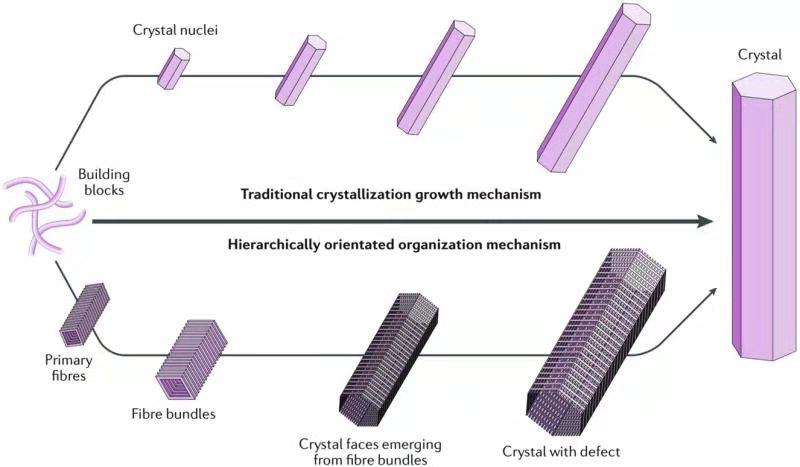 過程工程所等提出肽超分子組裝和結晶新機制