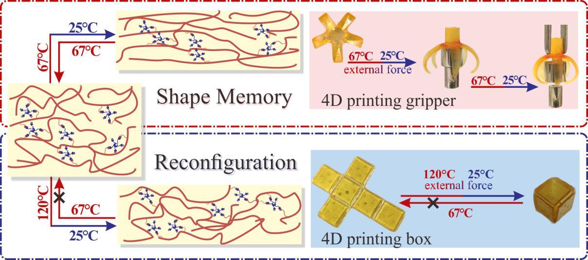 福建物構所光固化4D打印研究獲新進展