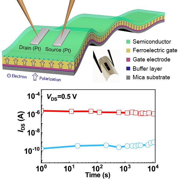 深圳先進院等研發出新型柔性鐵電場效應晶體管