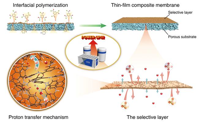 高选择透过性分离层复合离子传导膜提升液流电池性能
